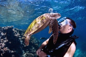 Green Seaturtle with Male Diver copy